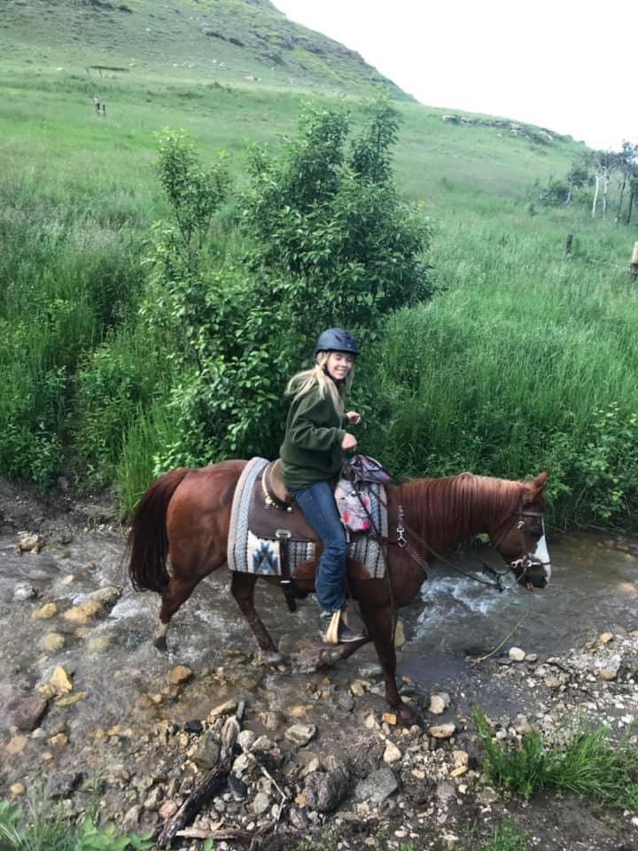 Horse-Stream